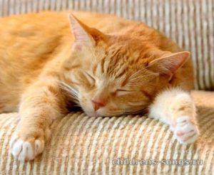 слова песни «Рыжий кот»