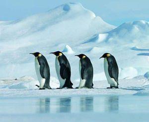 текст песни «Пингвины»